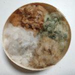 和綿の種4色
