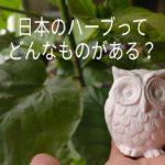 日本のハーブってどんな植物がある?